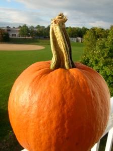 Clyde The Pumpkin