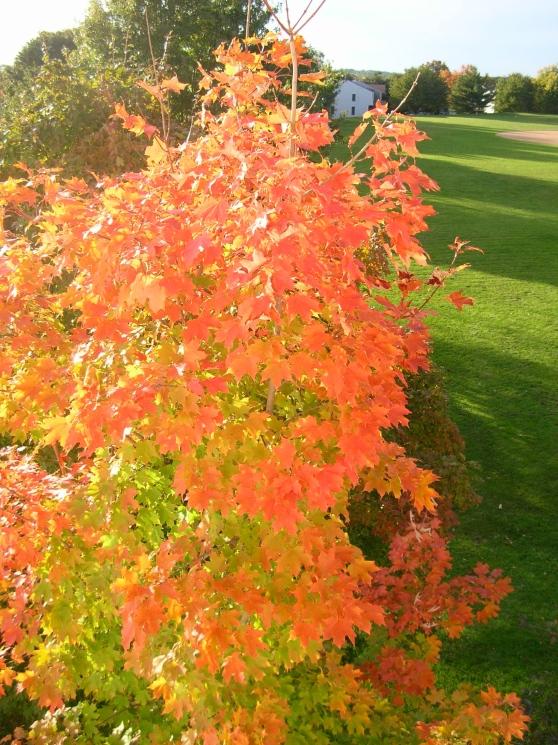 October Tree