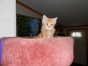 """Sunny is so proud of himself for climbing to the top of the kitty condo"""